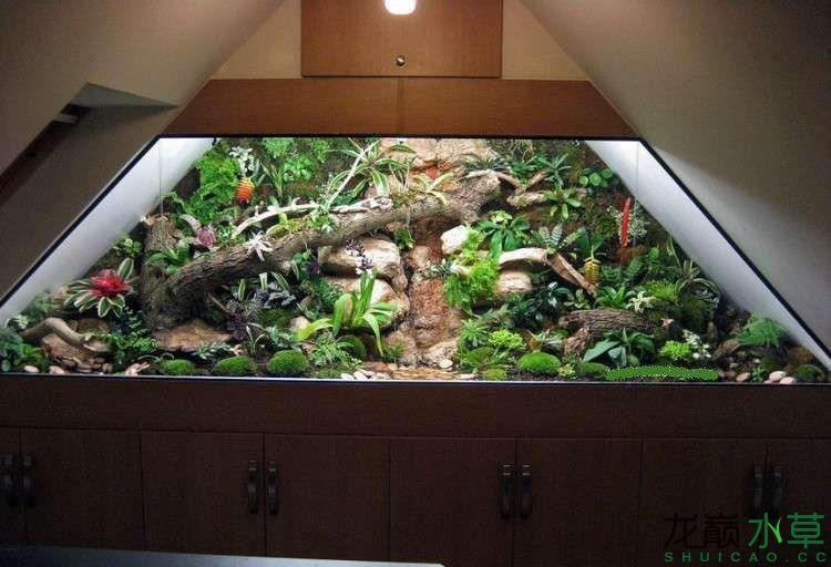 阁楼雨林缸4.jpg