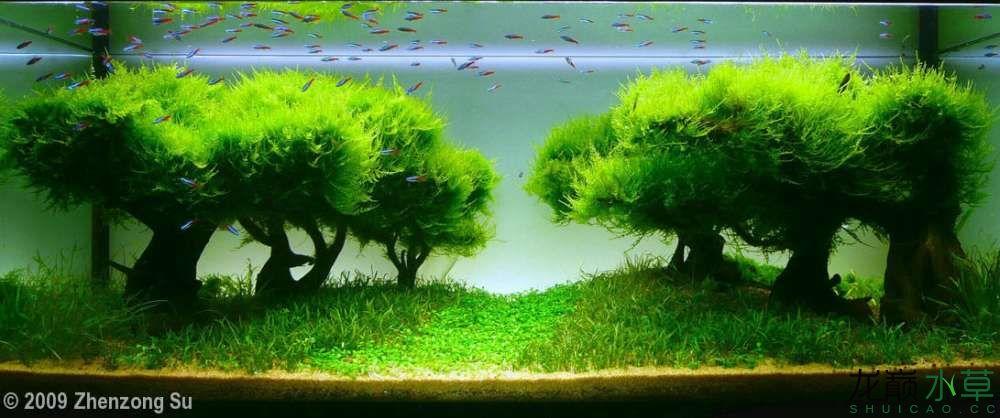 多树01.jpg
