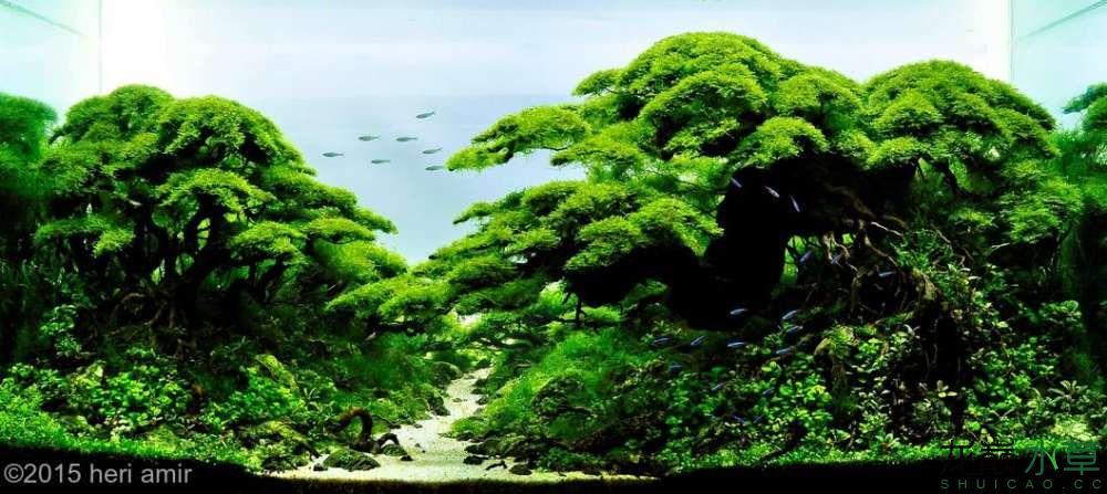多树08.jpg