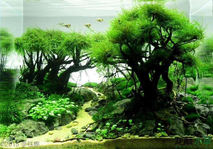 多树12.jpg