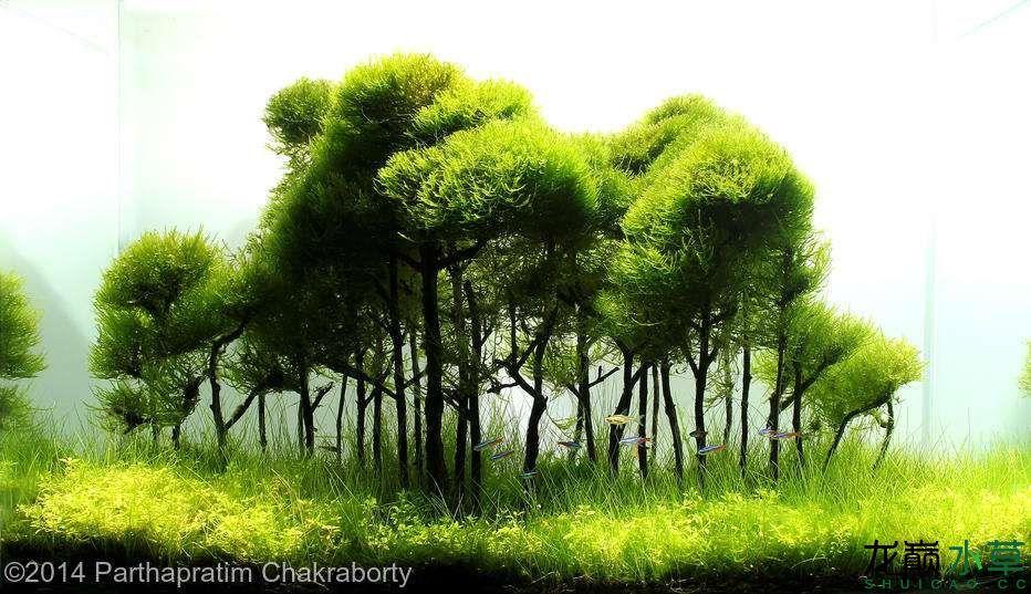 多树17.jpg