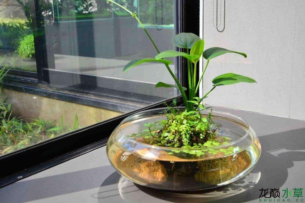 窗台水草缸4.jpg