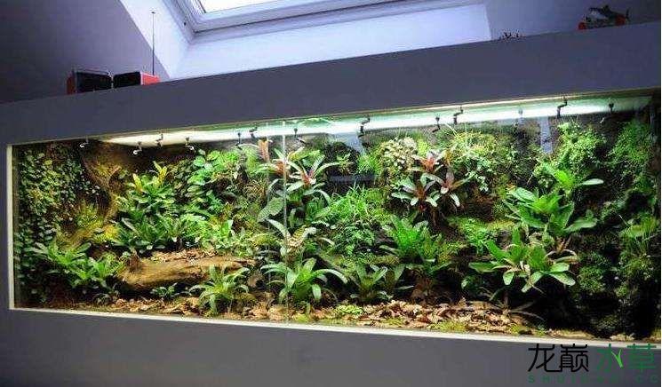 雨林4.jpg