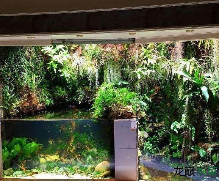 水草雨林1.jpg