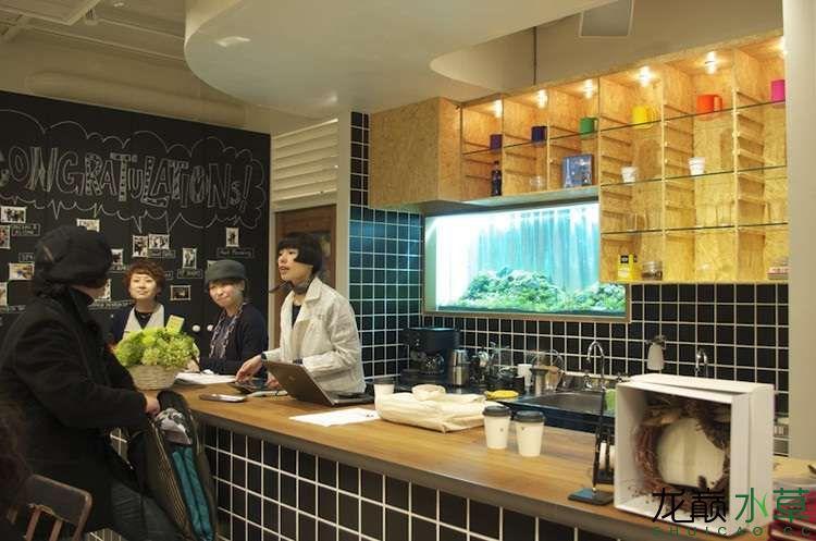 咖啡厅水草缸3.jpg