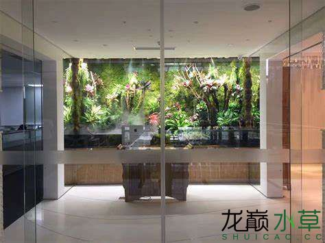 大型雨林缸1.jpg