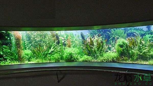 德国水族动物园.jpg