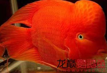 鱼友1.png