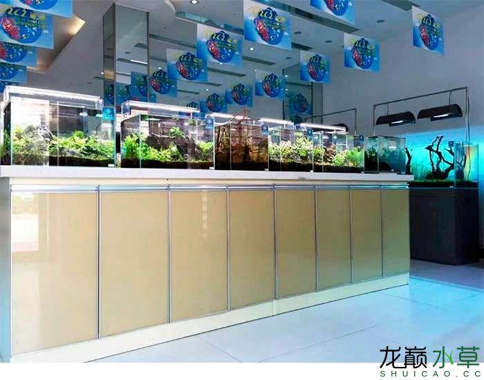 水草店5.jpg
