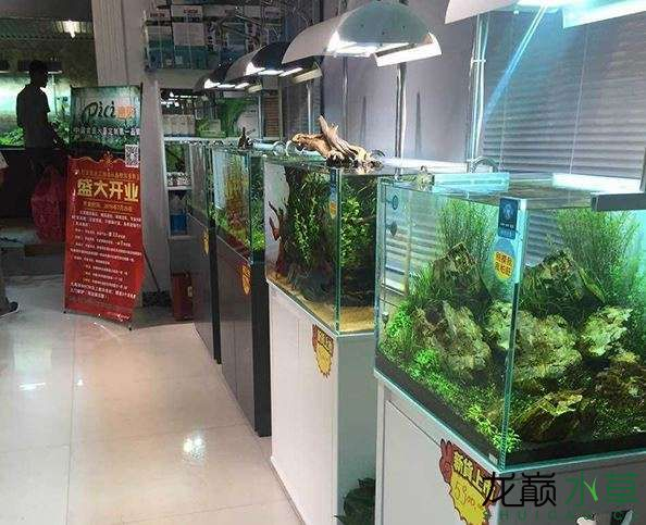水草店12.JPG