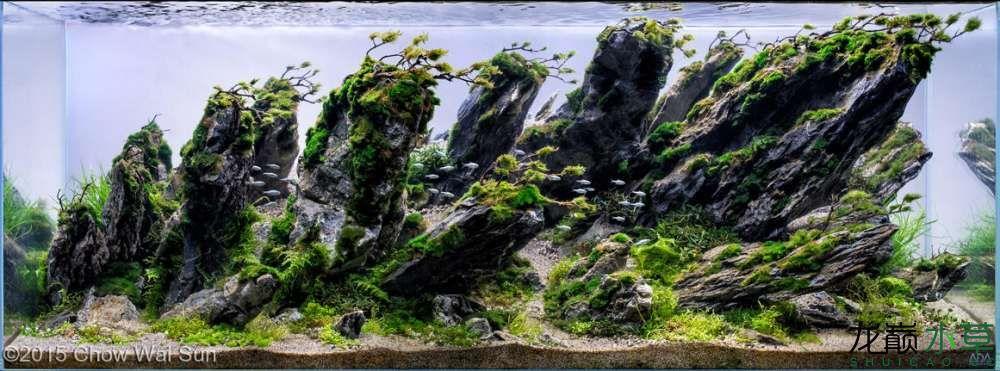石林11.jpg