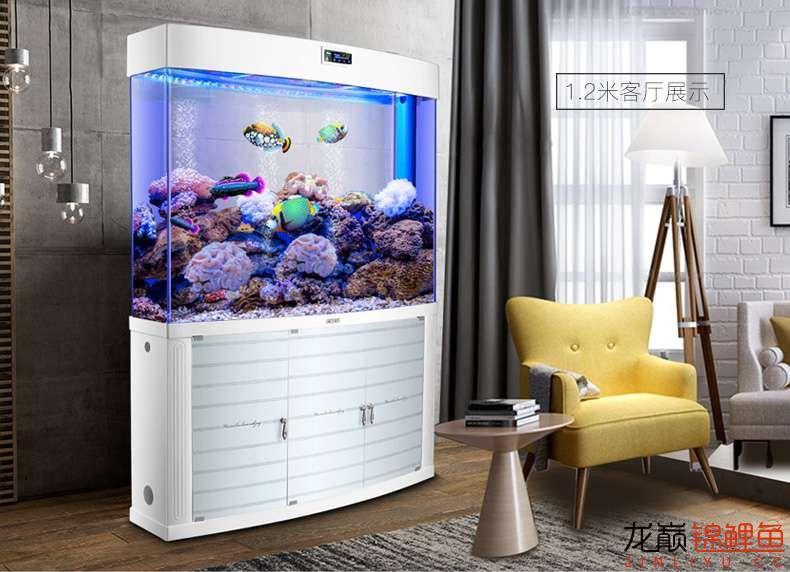 鱼缸B.jpg