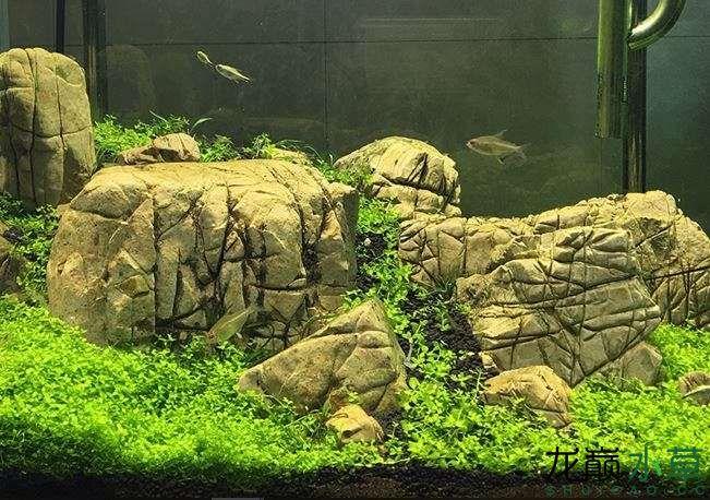 龟纹石3.JPG