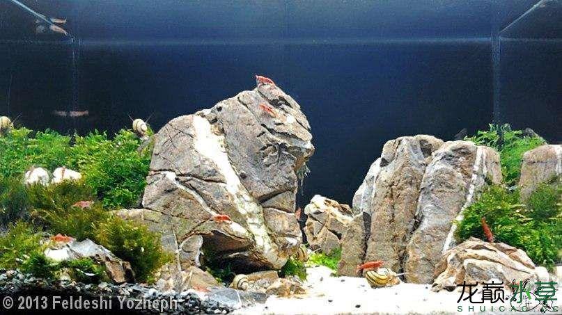龟纹石7.jpg