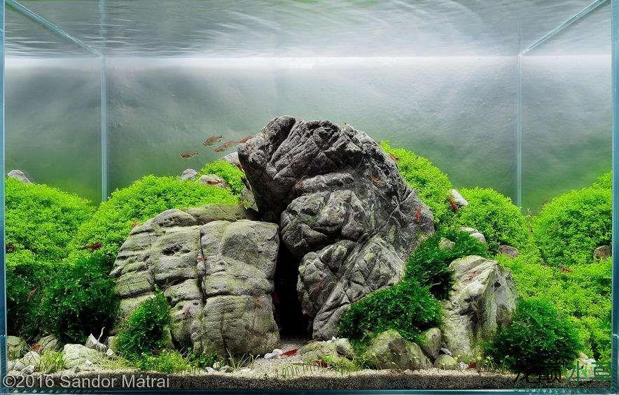 龟纹石14.jpg