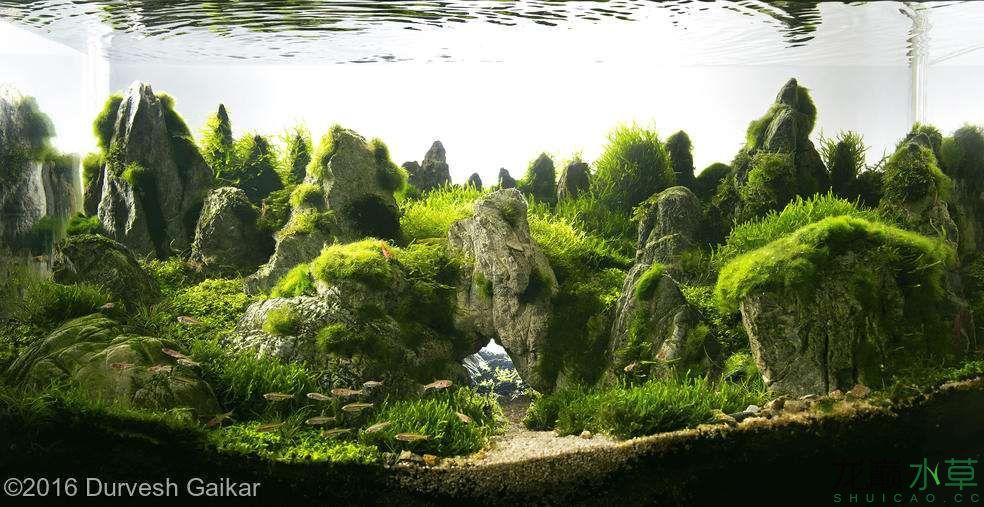 龟纹石15.jpg