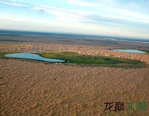 蒙古沙漠绿洲.jpg