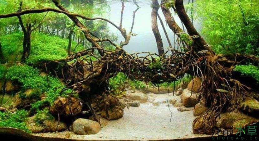 树根造桥.jpg