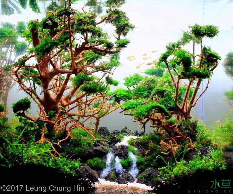 泰国沉木3.jpg