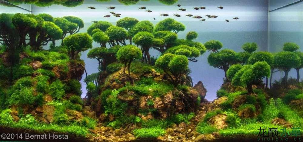 泰国沉木8.jpg