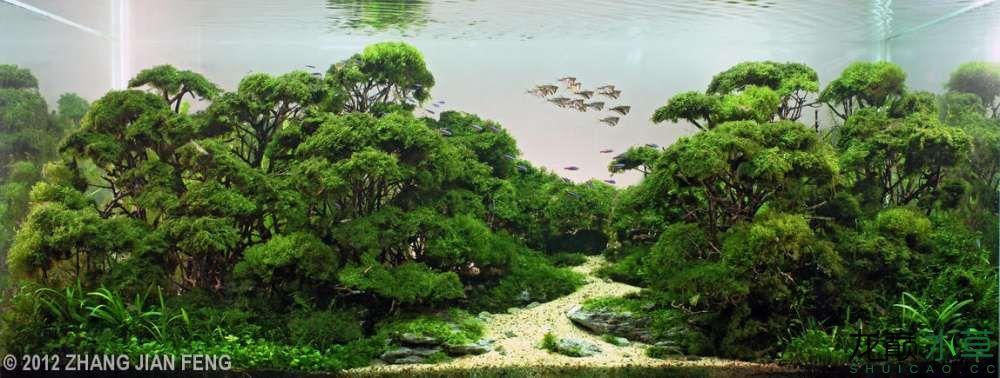 泰国沉木1.jpg