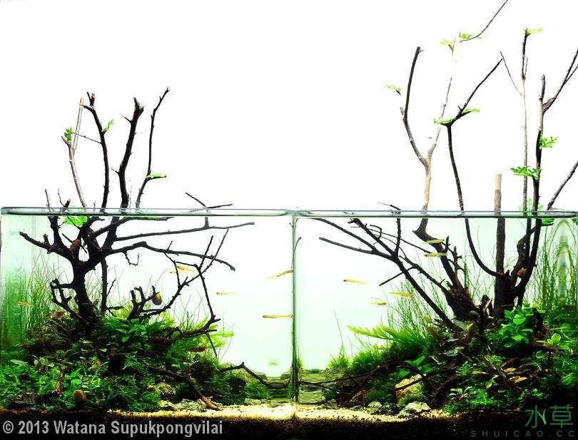 泰国沉木5.jpg