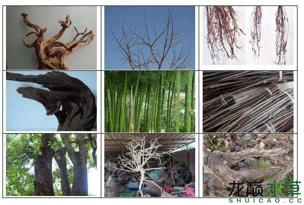 木材分类.JPG