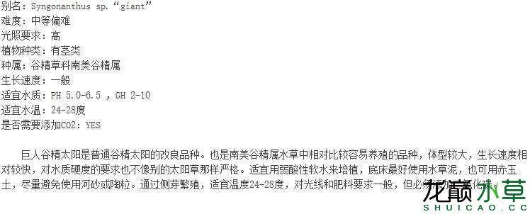 巨人谷精太阳简介.JPG