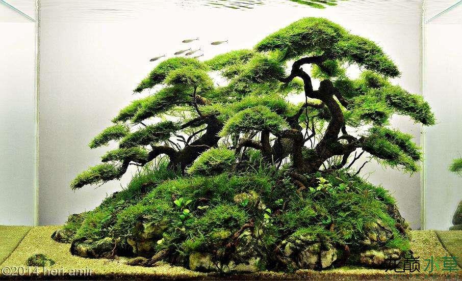 中式盆景造景.jpg