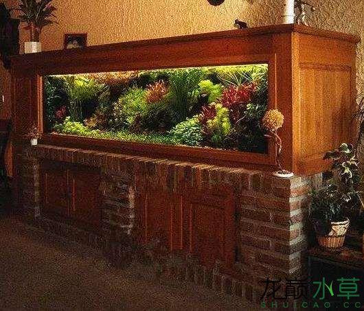 荷兰式水草造景缸1.jpg