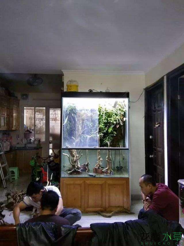 水草雨林缸1.jpg