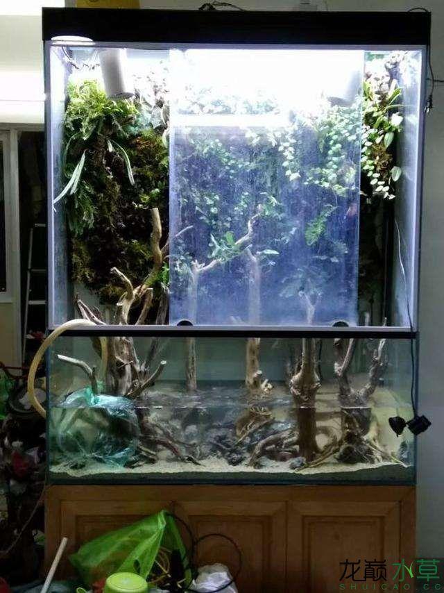 水草雨林缸2.jpg