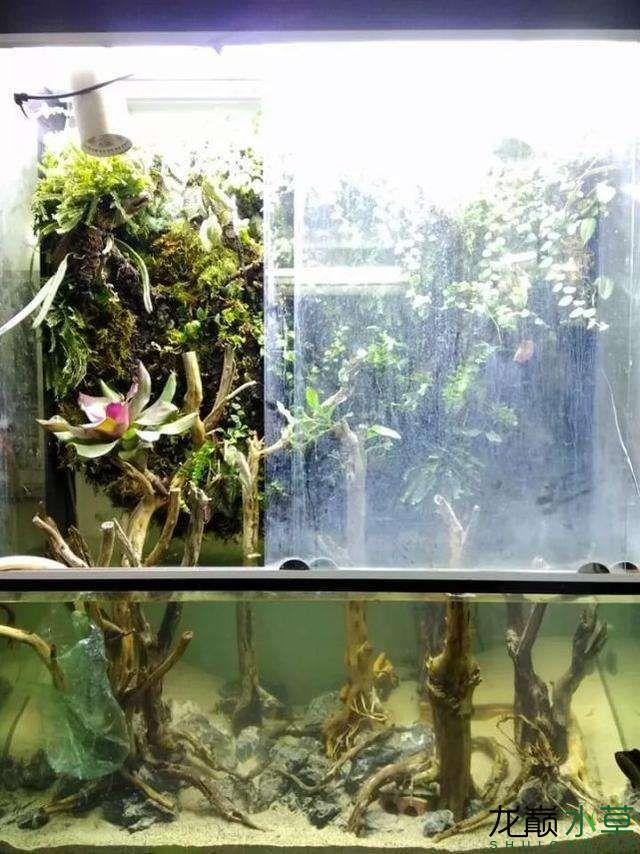 水草雨林缸3.jpg