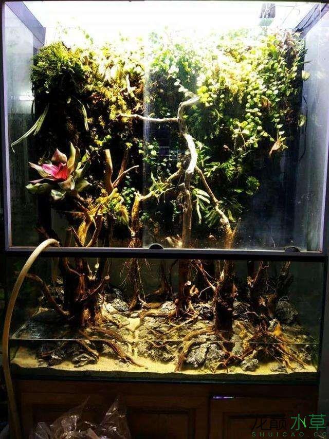 水草雨林缸5.jpg