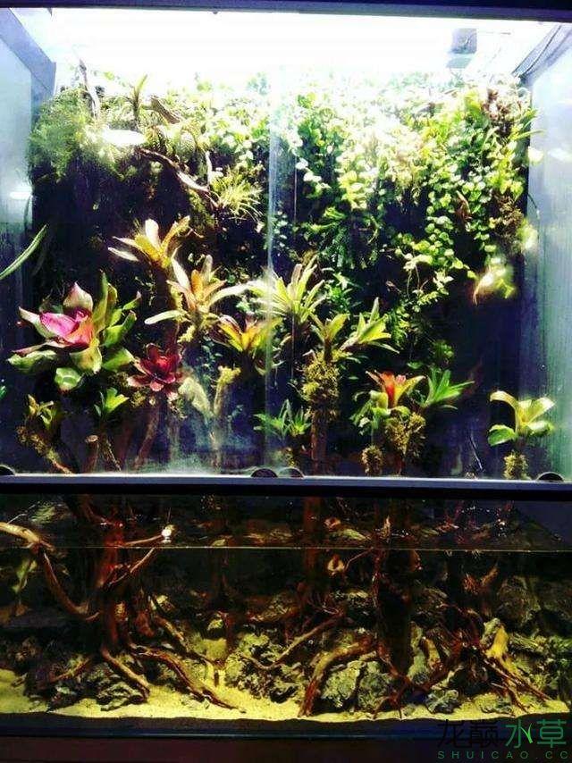 水草雨林缸6.jpg