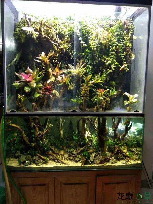 水草雨林缸8.jpg