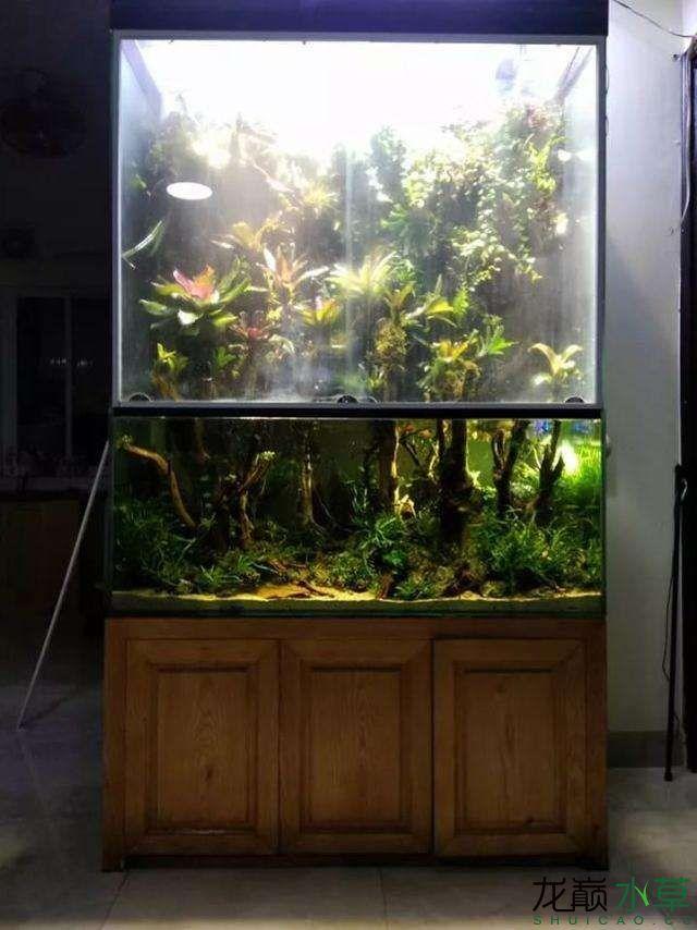 水草雨林缸9.jpg