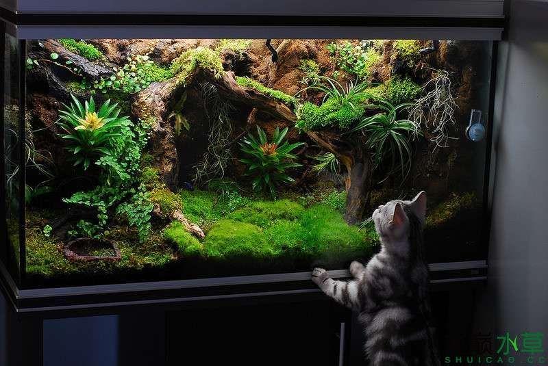 雨林缸1.jpg
