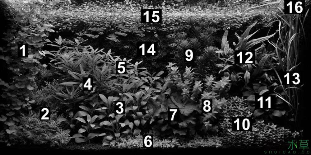 水草分布图1.jpg