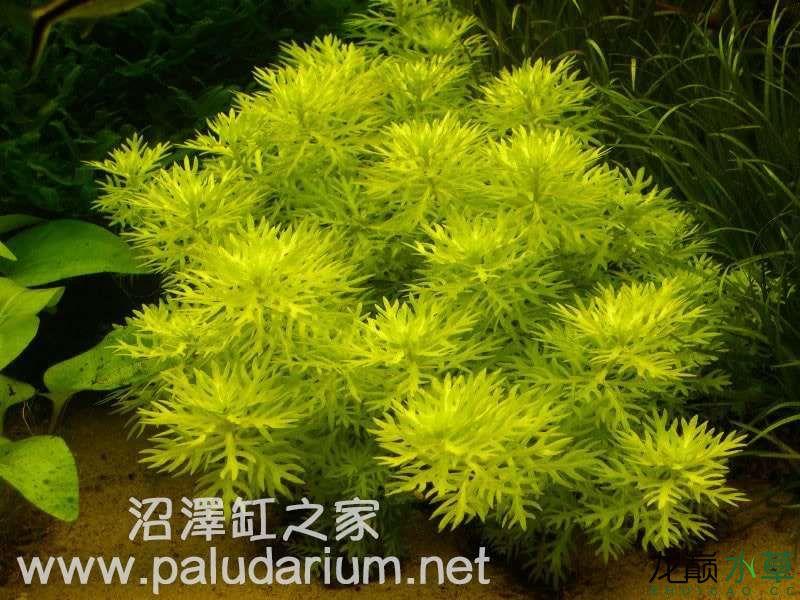 植物2.jpg