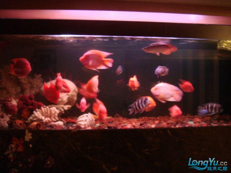 大杂烩(清晰版) 重庆观赏鱼 重庆水族批发市场第2张