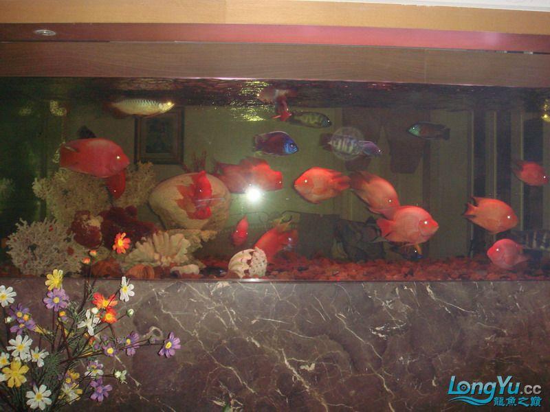 大杂烩(清晰版) 重庆观赏鱼 重庆水族批发市场第5张