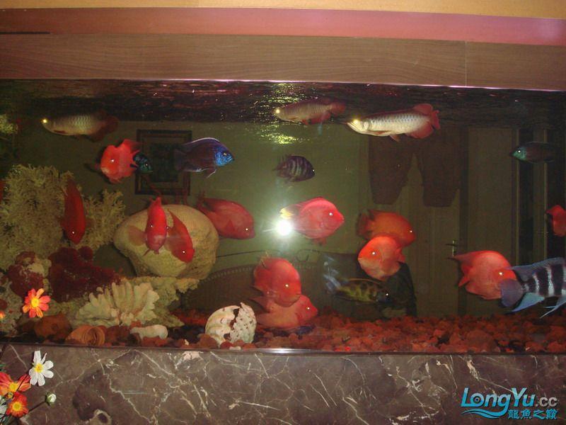 大杂烩(清晰版) 重庆观赏鱼 重庆水族批发市场第4张