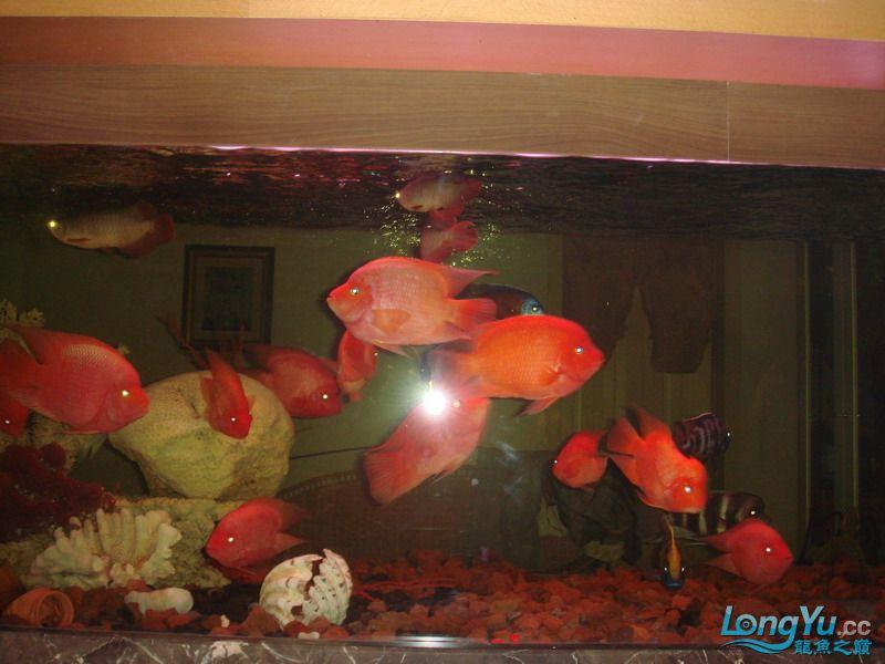 大杂烩(清晰版) 重庆观赏鱼 重庆水族批发市场第7张