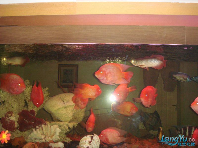 大杂烩(清晰版) 重庆观赏鱼 重庆水族批发市场第6张