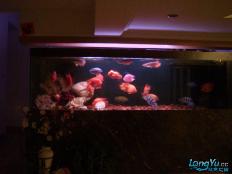 大杂烩(清晰版) 重庆观赏鱼 重庆水族批发市场第3张
