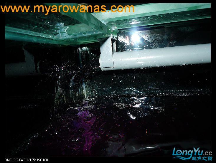 完美龙缸准备-2009-10-1 (更新附件安装 累了) 重庆龙鱼论坛 重庆水族批发市场第13张