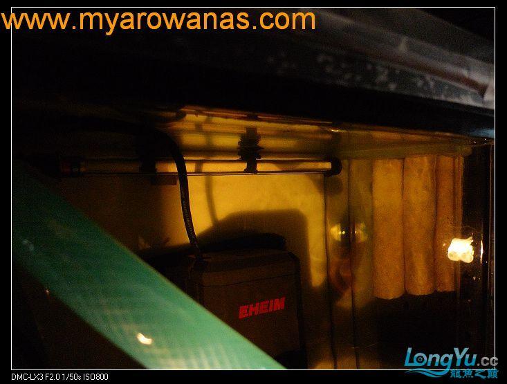 完美龙缸准备-2009-10-1 (更新附件安装 累了) 重庆龙鱼论坛 重庆水族批发市场第26张