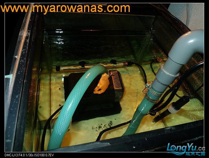 完美龙缸准备-2009-10-1 (更新附件安装 累了) 重庆龙鱼论坛 重庆水族批发市场第23张