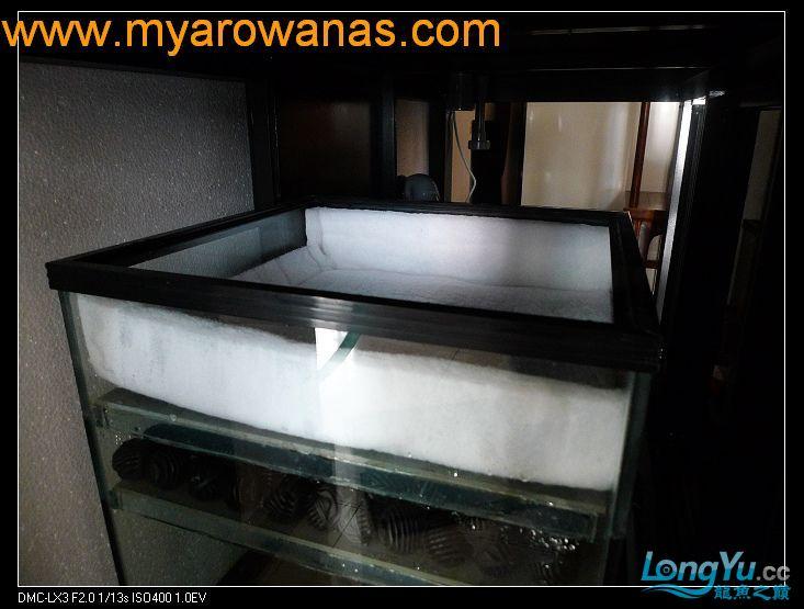 完美龙缸准备-2009-10-1 (更新附件安装 累了) 重庆龙鱼论坛 重庆水族批发市场第30张